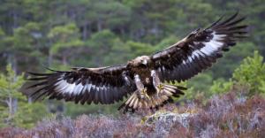 eagle soars beyond earthly concerns